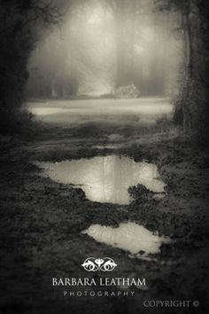 Taken in the woods just outside of Tilshead village on the Salisbury plains in Wiltshire, this has been edited in the style of Sally Mann, someone who always inspires me. by Barbara Leatham Photography - copyright 2914
