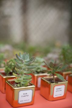 succulents in gold pots served as escort cards and favors