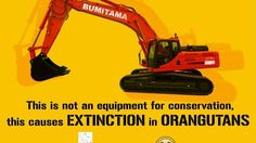 Singaporean company is bulldozing more forests for palm oil plantations...killing orangutans and destroying the ecosystem