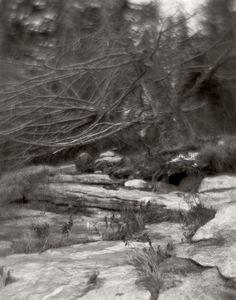 https://flic.kr/p/qmRitP | img563 | trees at Birch Point Beach State Park, Owls Head Maine. December 2014. B&J 8x10 field camera and Kodak 305 portrait soft focus lens. tmy2 tmax 400 8x10 film in pyrocat hd
