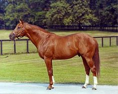 America's Superhorse This Day in History: June 9, 1973 | If you are into horse racing, this day in 1973 held 100,000 people spellbound! This story is not about just any horse, it is about the most famous horse in horse-racing history, Secretariat, Triple Crown Champion and America's Superhorse! Secretariat was owned by Penney Chenery Tweedy, trained by Lucien Laurin and groomed daily by Eddie Sweat.