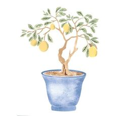 Winterthur Chinese Parlor Lemon Tree Wall Stencil This Chinese Parlor lemon tree is from the origina Tree Stencil For Wall, Tree Wall, Lemon Plant, Tree Watercolor Painting, Unique Drawings, Tree Illustration, Tree Photography, Original Wallpaper, Fruit Art
