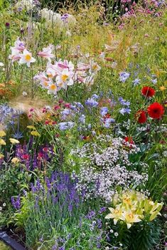 Lilium lilies, blue flowers of Agapanthus lily-of-the-Nile, ornamental grasses, Gypsophilia baby's breath, red Dahlia, Eryngium, yellow Achillea,spikey blue eryngium herb Lavandula lavender, in mixed flower garden of perennials and herbs in varying heights, textures, colors #FlowerGarden