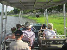 Zambezi Queen Game Cruise tender boats get close to a Buffalo on the Chobe