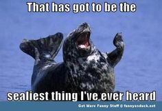 seal laughing animal funny pics pictures pic picture image photo images photos lol