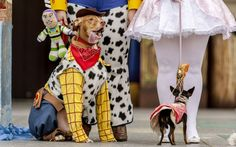 Two of the dogs participating in Las Palmas de Gran Canaria's Dog Carnival