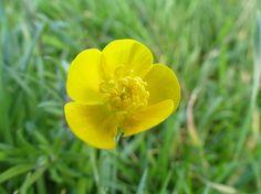 Lichtblick - ein gelber Blütengruß