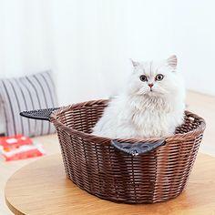 čierne vtáky biela mačička pics