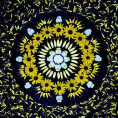 danmalas mandalas de fleurs de kathy klein 21   Les mandalas de fleurs de Kathy Klein   Sculpture plante photo mandala Kathy Klein image fru...