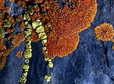 Lava Photos, Rock Pictures, Volcano Photos, Gallery, Wallpapers -- National Geographic Like this. Patterns In Nature, Beautiful Patterns, Textures Patterns, Beautiful Images, Fungi, Lava, Volcano Photos, Mellow Yellow, Natural Texture