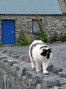 """Beware of people who dislike cats."" - Irish proverb"