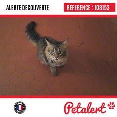 24.06.2017 / Chat / Carpentras / Vaucluse / France