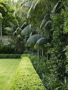 Buxus hedge with mixed planting - formal and tropical garden plants - Tropical Garden Design, Tropical Backyard, Tropical Landscaping, Backyard Landscaping, Tropical Gardens, Hedges Landscaping, Formal Garden Design, Landscaping Melbourne, Modern Backyard