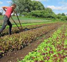 How To Earn $140k Farming 1.5 Acres