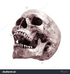 Sideview Of Human Skull Open Mouth On Isolated White Background ...