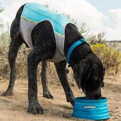 Ruffwear Jet Stream Cooling Vest. Keeps dogs cool and comfortable during summer adventures.