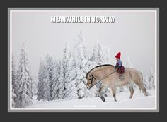 Meanwhile in Norway meme with young girl on a Fjord horse. From Norskarv.com