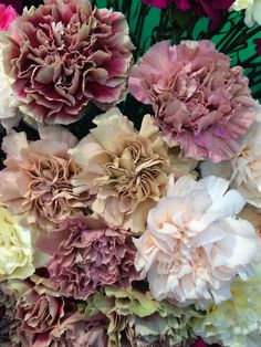 Antique carnations come in unique, rich colors that are often more subdued than most. They are also cheaper than many other flowers, smell wonderful, and last a long time in case you want to bring them home or to a brunch the next day. :)