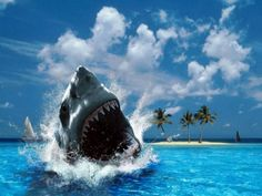 Tiburones | Tiburones