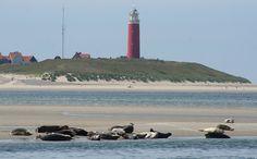 Olanda - Olanda - foche all'isola di Texel - di honey-sunny