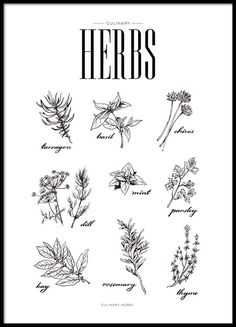 Modern poster with illustrations of herbs.