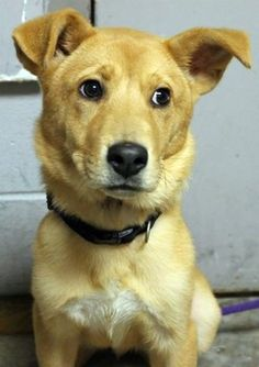 ***7/5/14 LISTED***http://www.examiner.com/article/lamont-beautiful-shepherd-mix-with-the-cutest-face-is-out-of-time-at-sc-shelter?CID=examiner_alerts_article