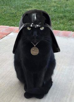 I find your lack of treats disturbing - LOLcats is the best place to find and submit funny cat memes and other silly cat materials to share with the world. We find the funny cats that make you… Cute Funny Animals, Funny Animal Pictures, Funny Cats, Animal Pics, I Love Cats, Crazy Cats, Cool Cats, Gatos Cats, Beautiful Cats