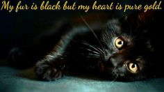 Black kitties are the sweetest cats of all :)
