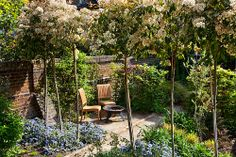 Beech hedge and Photinia standards create tiered screens for privacy and interest.  In May the Photinia 'pompoms' and creeping Ceanothus are in flower.