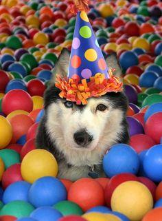 Birthday Tay
