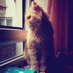 Çok tatlı maşallah ☺