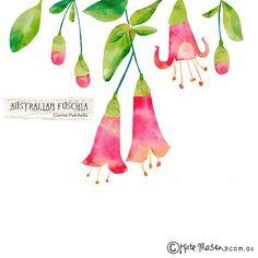 We drew sweet little fuschia' for @projectadelaide today. #illustration #flora #flower #messymisskate #adelaide #projectadelaide @ingramzoe | by Kate Mason @ messy Miss Kate