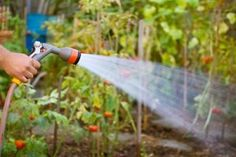 Saving Water in the Garden | Stretcher.com - Control the use of this necessary resource