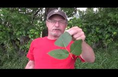 He Grabs A Poison Ivy Plant With His Bare Hand, And Reveals A Brilliant Way To Prevent Rashes