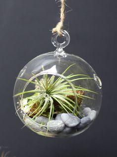 Air Plant Terrarium Kit - Hanging Terrarium - Hanging Glass Terrarium