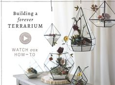 Succulent Terrariums + Terrarium Supplies | Terrain