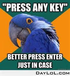 paranoid parrot - - Yahoo Image Search Results