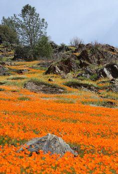 Poppy Ridge  Yosemite...Flickr - Photo Sharing!