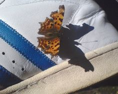 Butterfly addidas