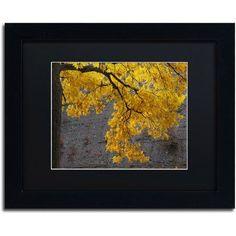 Trademark Fine Art Golden Autumn Color Canvas Art by Kurt Shaffer, Black Matte, Black Frame, Size: 11 x 14, Multicolor