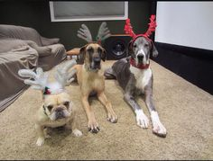 3 dogs wearing antlers