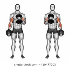 Find Cross Body Hammer Curls Illustration stock images in HD and millions of other royalty-free stock photos, illustrations and vectors in the Shutterstock collection. Gym Workout Videos, Gym Workouts, At Home Workouts, Forearm Workout, Dumbbell Workout, Chest Workouts, Portfolio, Mens Fitness, Cross Body