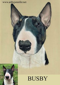Pastel portrait of an English Bull Terrier. Pet and Horse portraits in Pastel. Commissions taken, I work from your own photo. Based in Nottingham UK, but I ship Worldwide. www.artbyjennifer.net