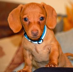 cute-puppy-pictures14.jpg