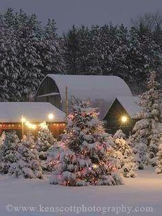 Christmas Tree Farm, Leelanau County, Michigan - Looks like a Winter Wonderland!
