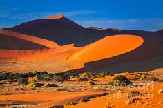 Famous orange huge sand dunes in Soussusvlei in Namibia, Africa, taken at sunset.