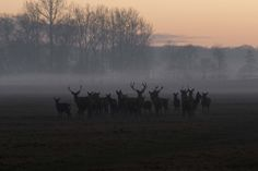 deers in the sunset fog