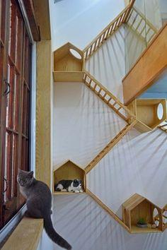 Cat Climbing Wall, Animal Gato, Funny Animal, Diy Cat Tree, Cat Run, Cat Playground, Outdoor Playground, Cat Shelves, Pet Furniture