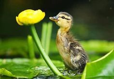 Life Around The Pond