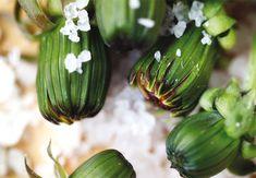 Villit nuppukaprikset - Kodin Pellervo Eggplant, Pickles, Cucumber, Vegetables, Eat, Vegetable Garden, Eggplants, Vegetable Recipes, Pickle